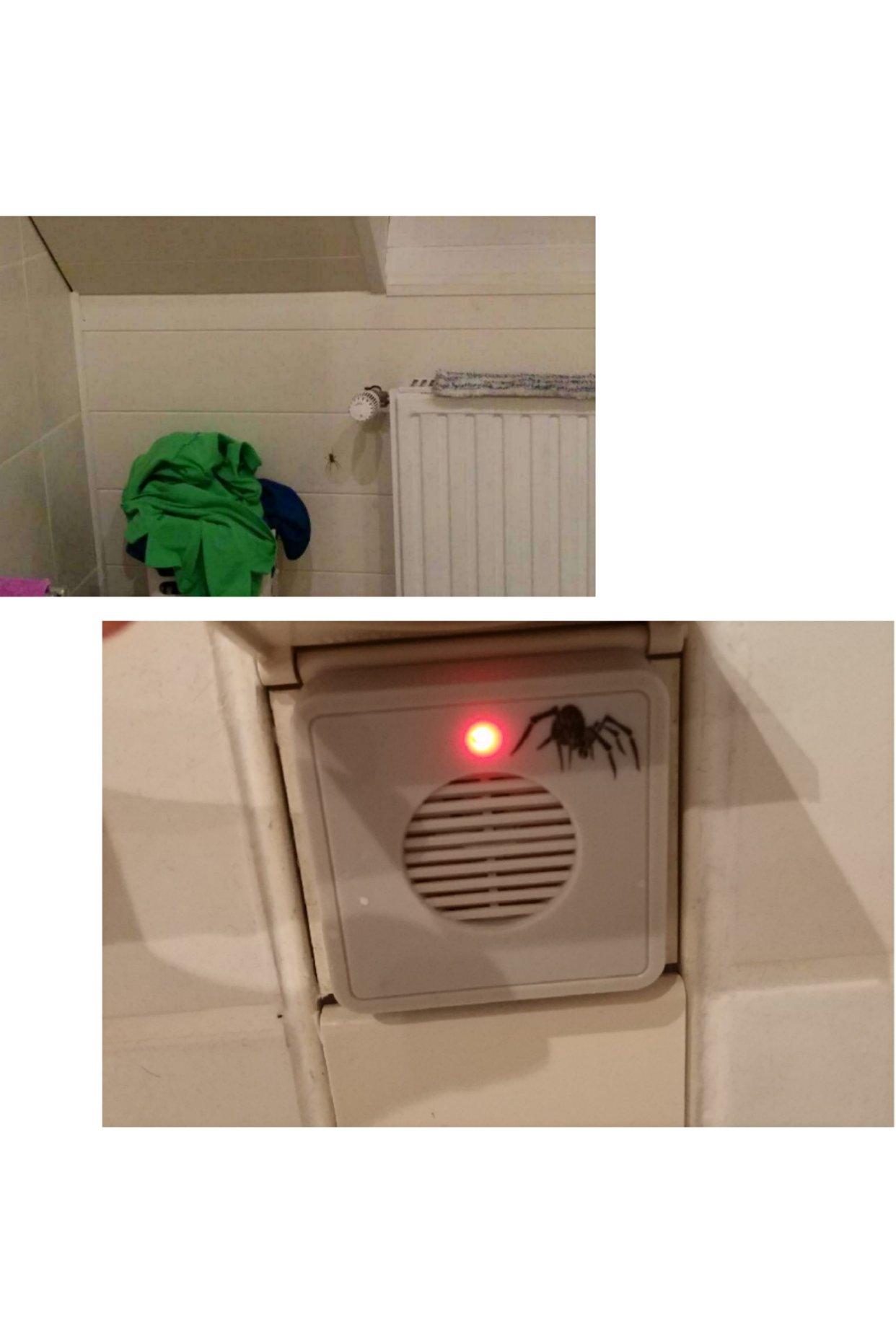 怎么德国那么多蜘蛛?!