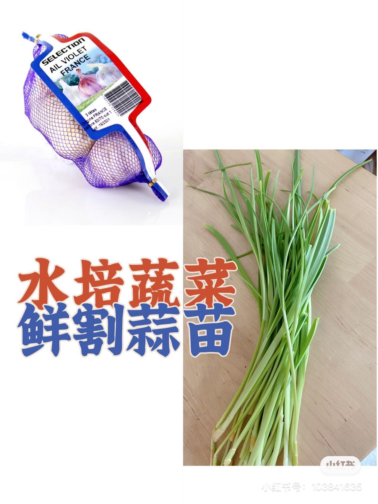再生蔬菜 | 无情蒜苗收割机