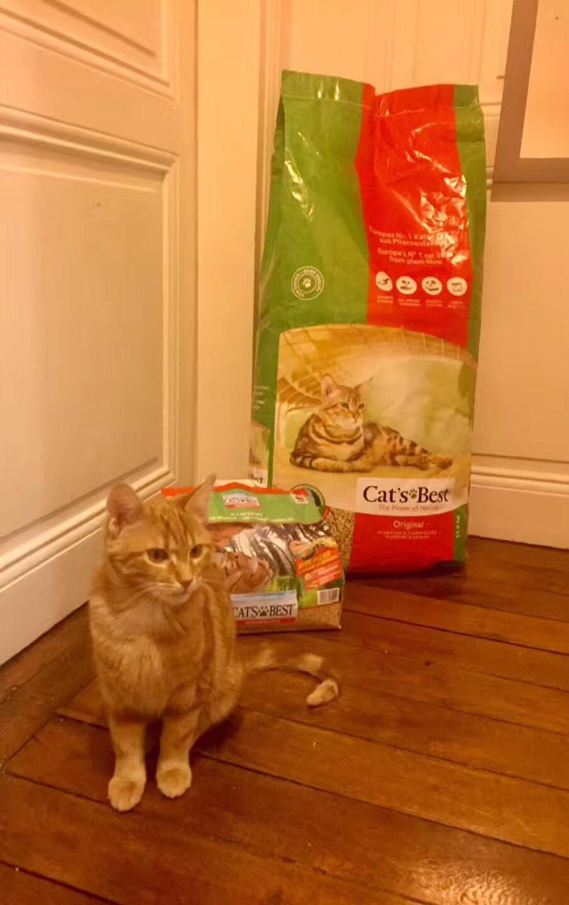 求推荐猫砂🐱