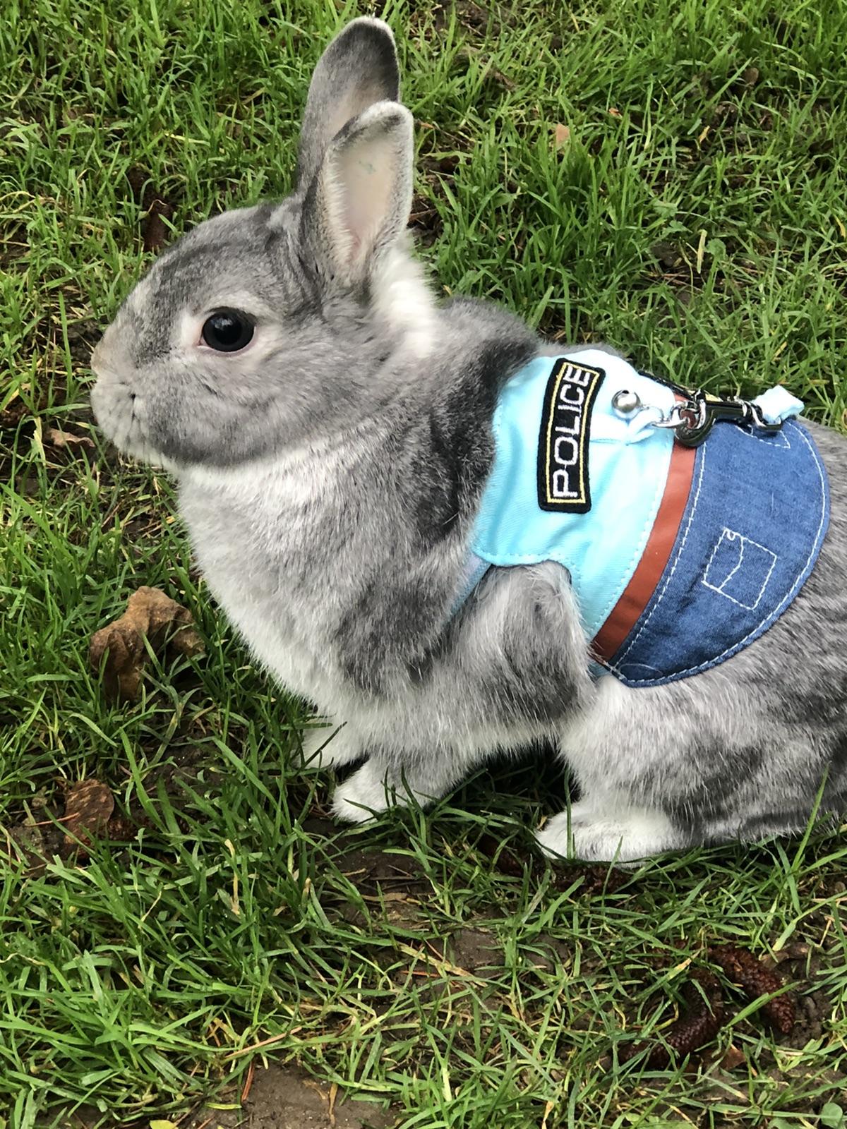 有没有同养兔子🐰的小伙伴