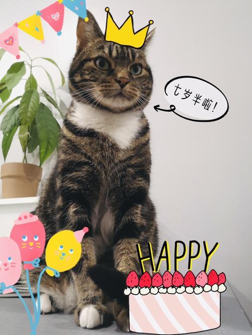 海哥🐱过生日🎂啦!