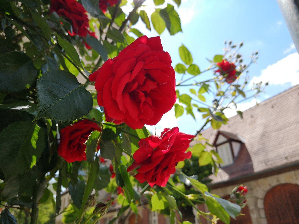 Erlangen,你静静绽放美丽,而我爱着你🕊