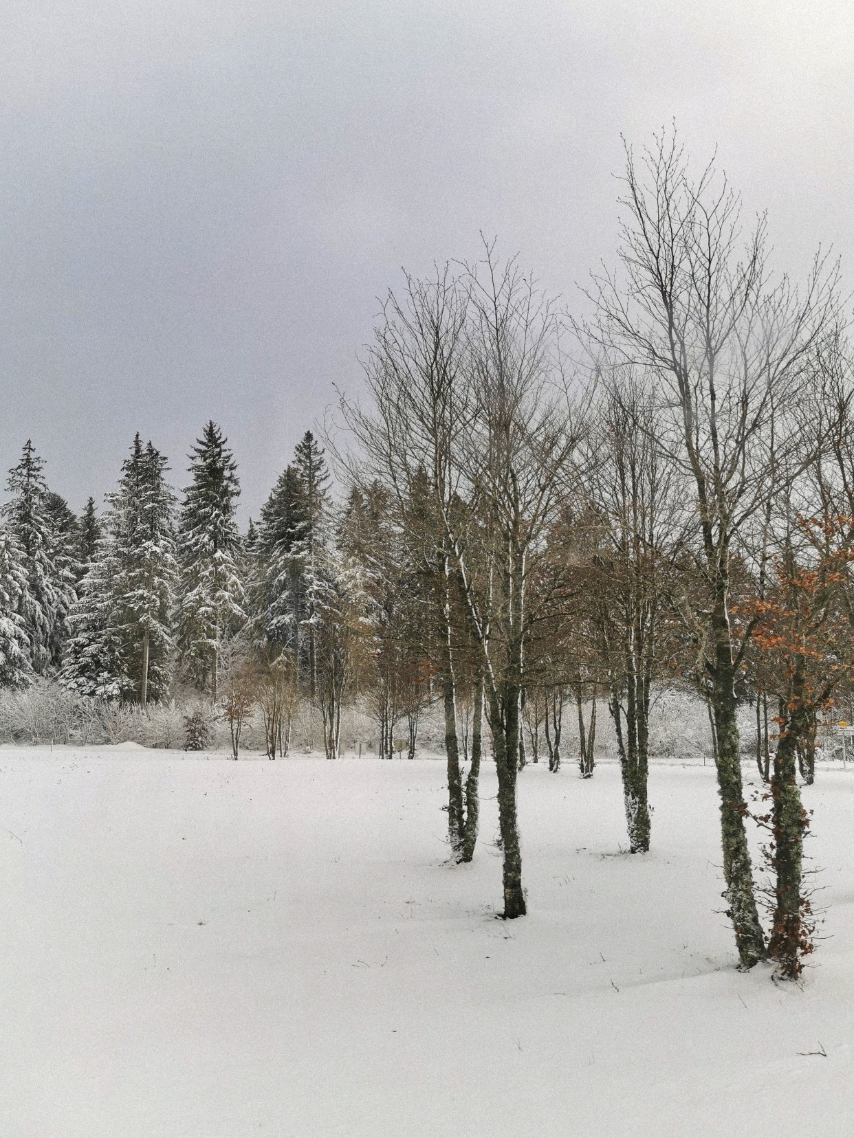 大家今年都看到雪了吗~