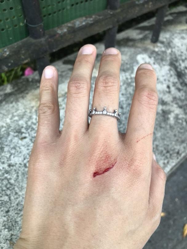 今天被一只大黄猫吓死了