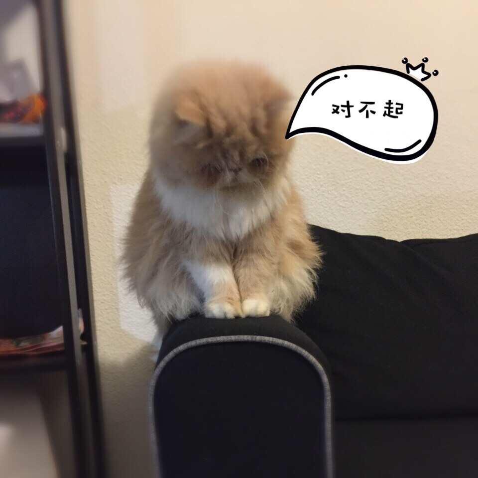 做我的猫!