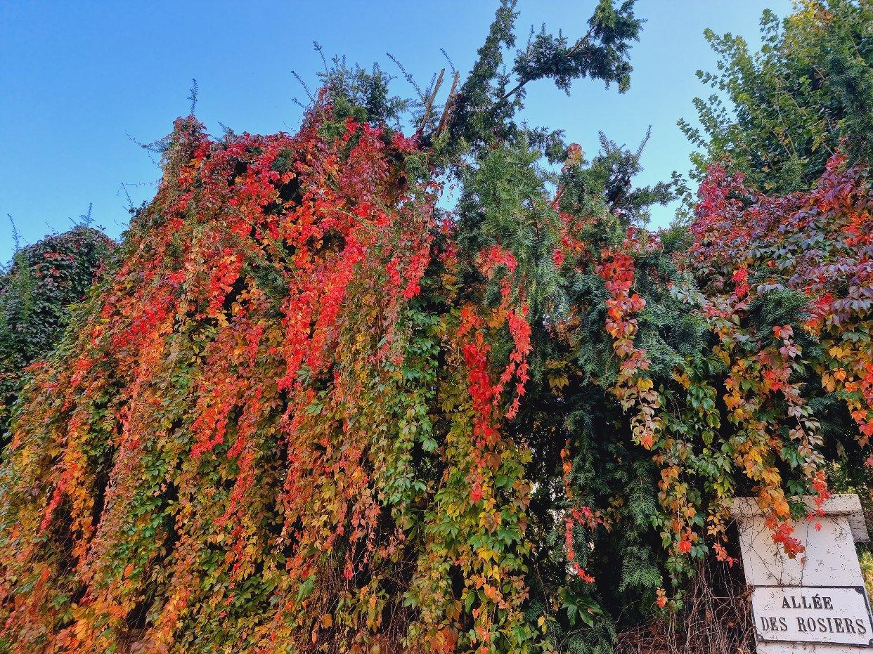 惬意的秋景