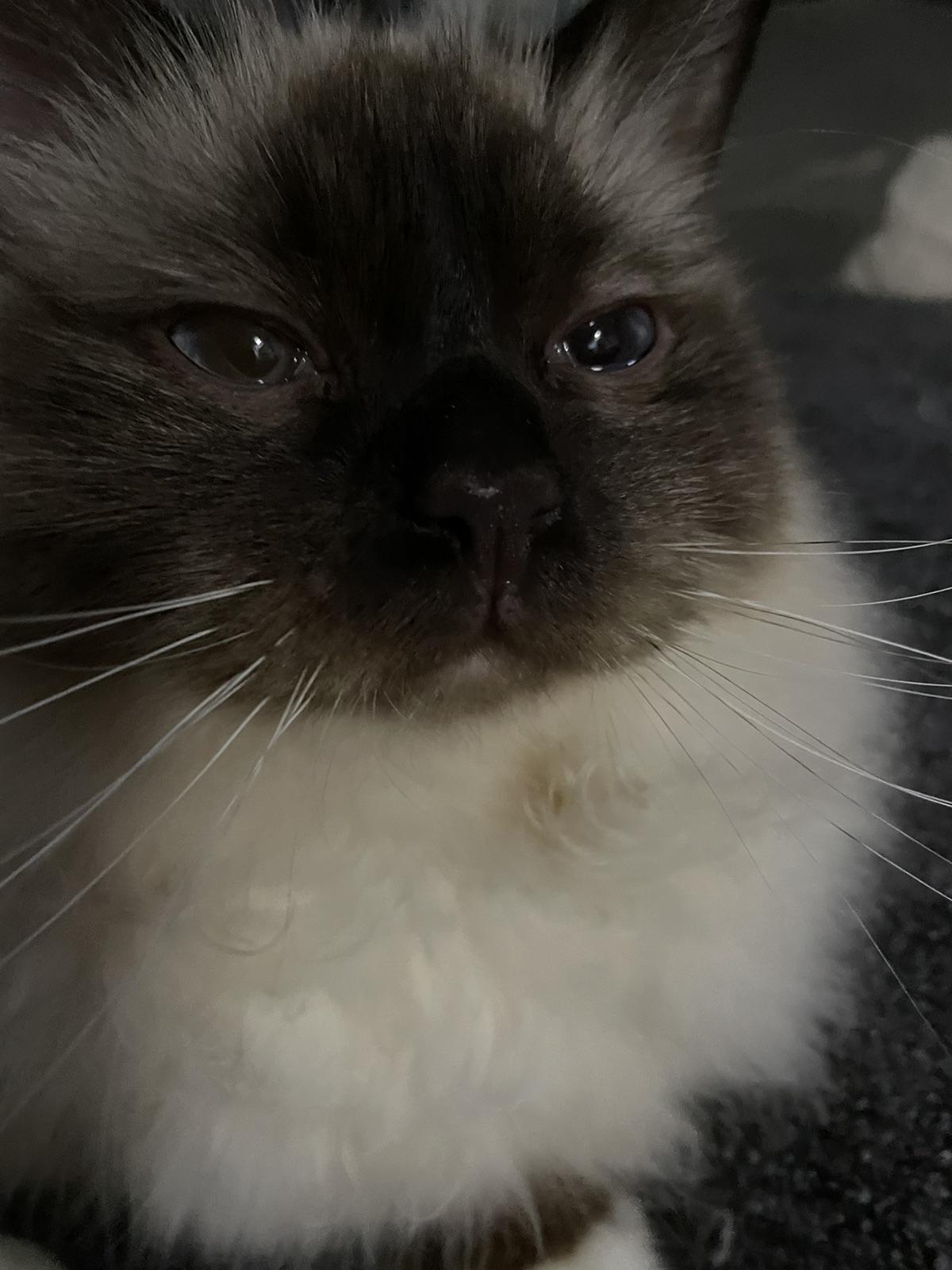 不允许❎你们不知道这款神仙猫