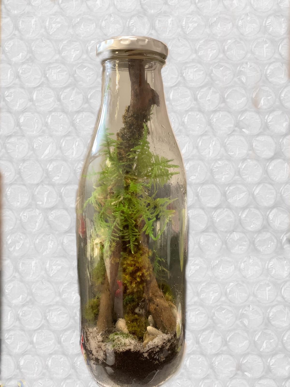 Diy 苔藓瓶