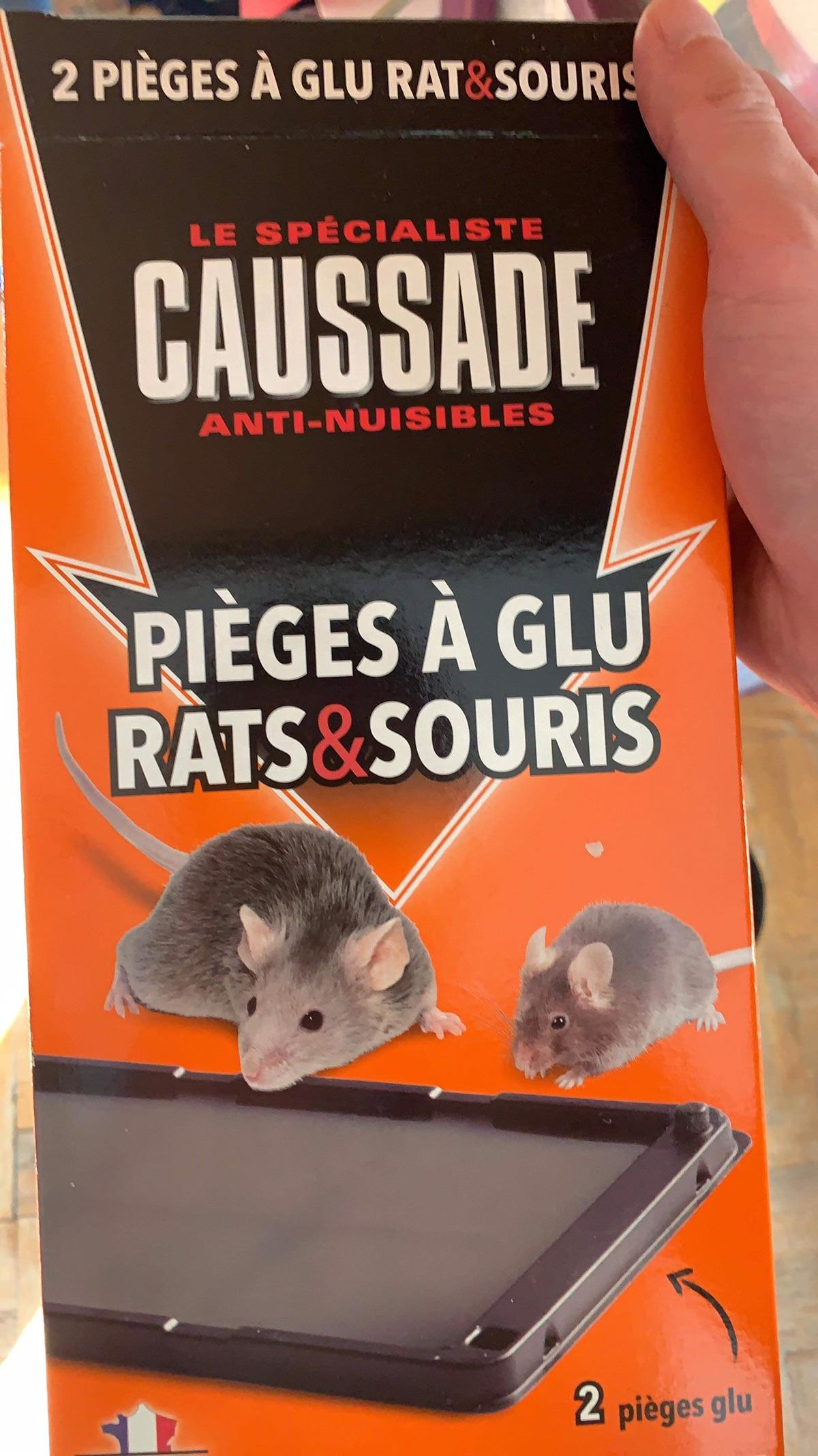 战鼠日记 第一次见老鼠+放完第二天抓住2只