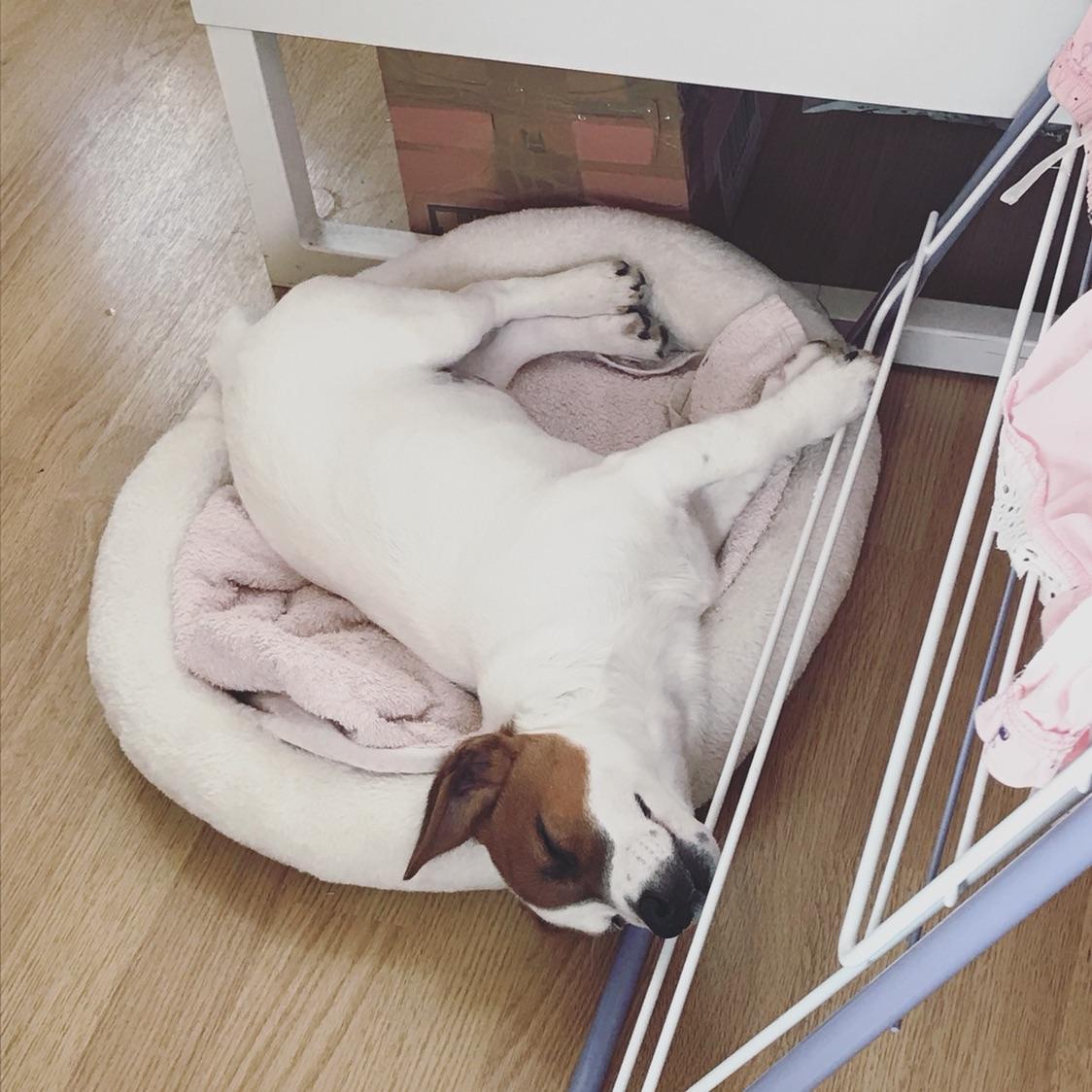 多图睡姿大比拼:谁能战胜我家狗子😂