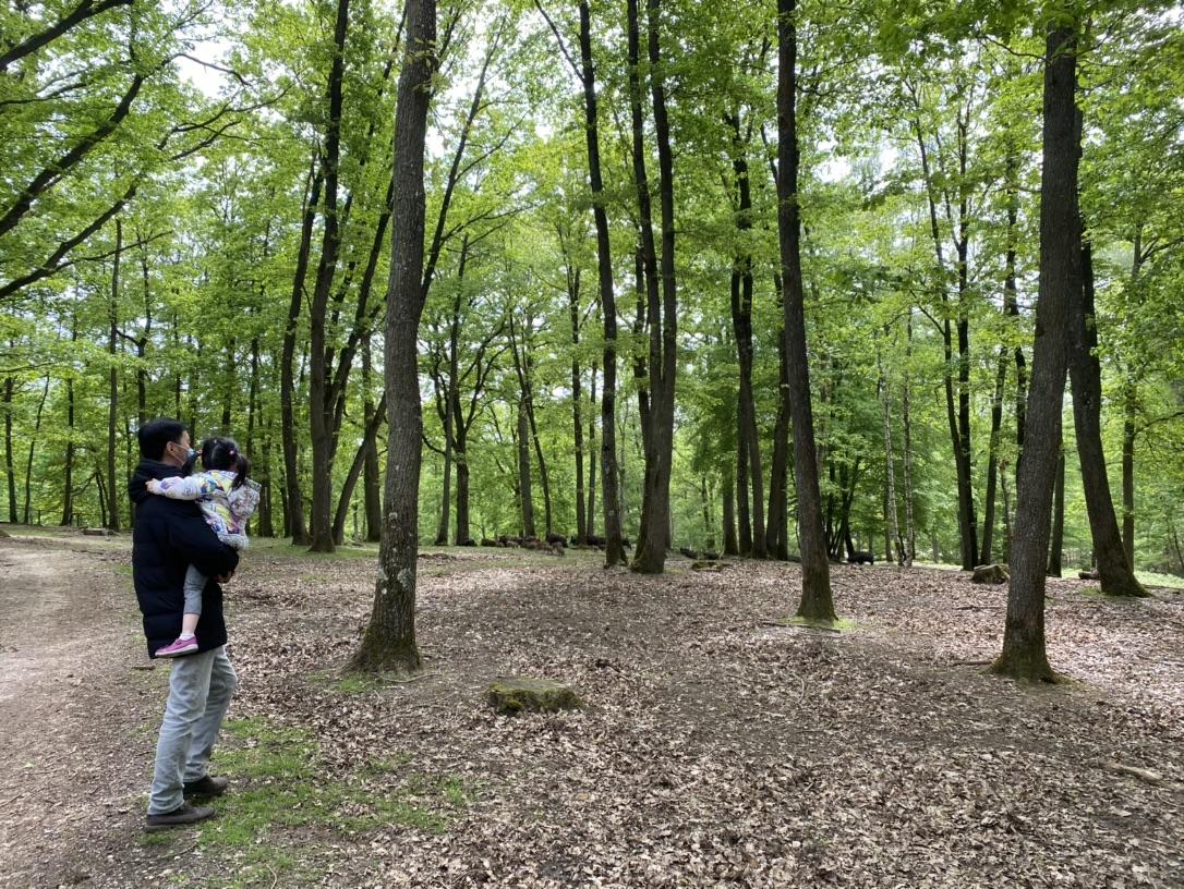 Espace Rambouillet森林探险