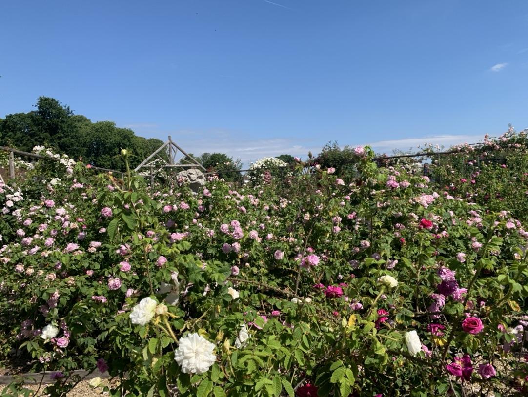 马恩河谷玫瑰园免费