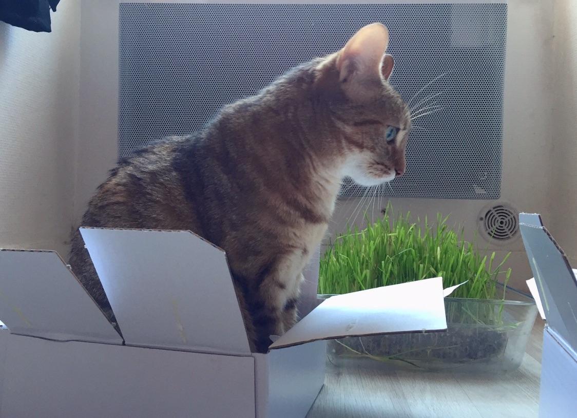 我薅了羊毛 开心~ 猫有了盒子 开心~