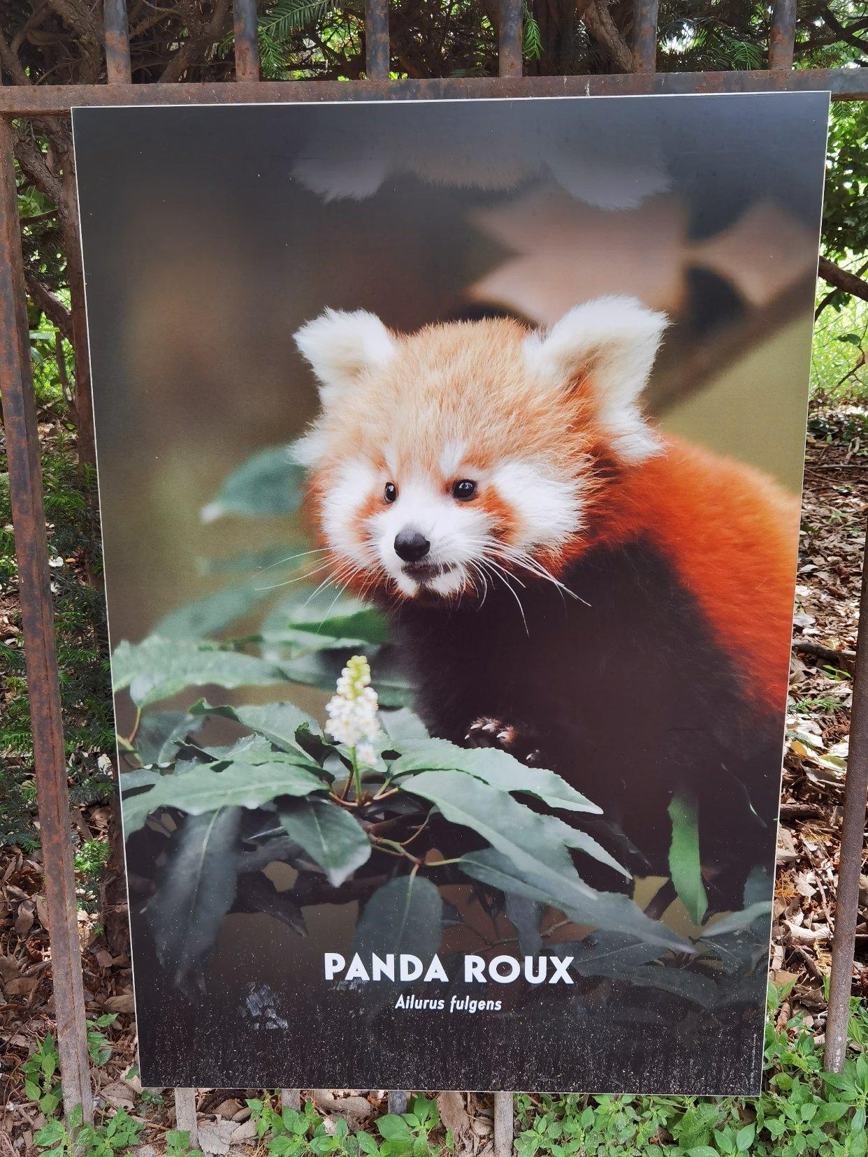 找到巴黎有这个小熊猫的公园啦!