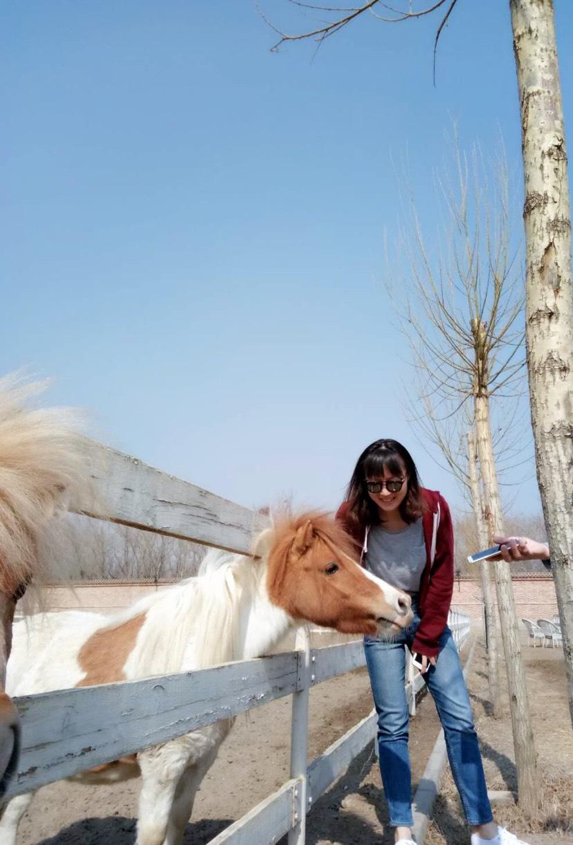 小矮马真的是太萌啦~