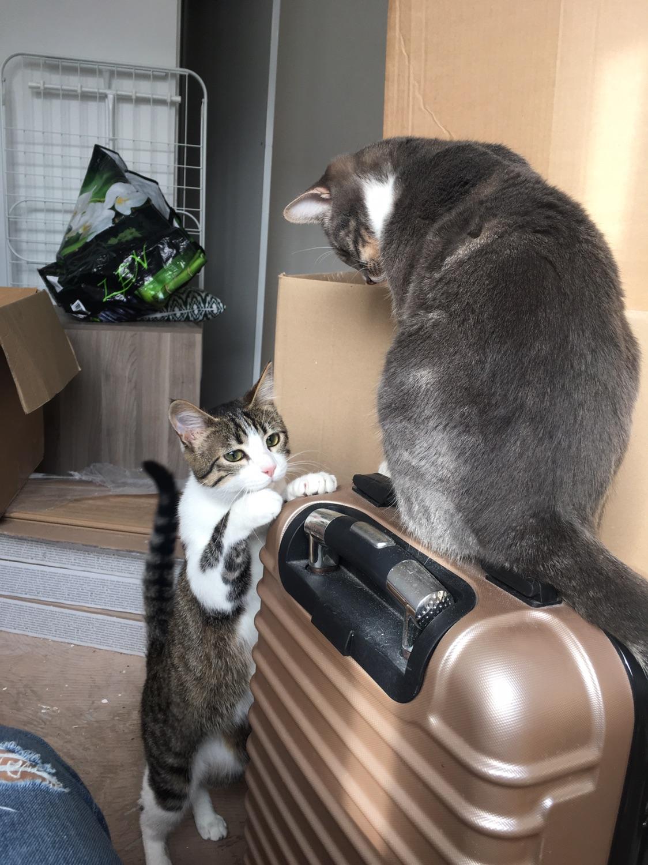 男生喜欢什么?当然是猫呀!
