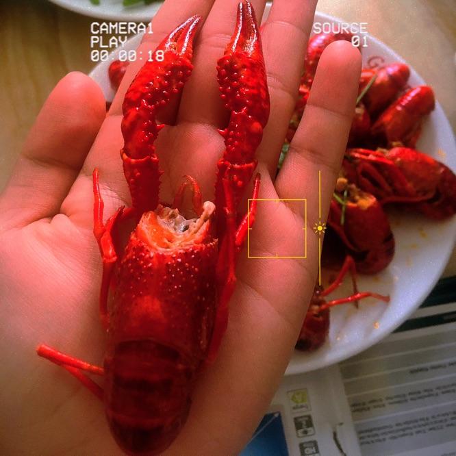 放毒之小龙虾🦞🦞