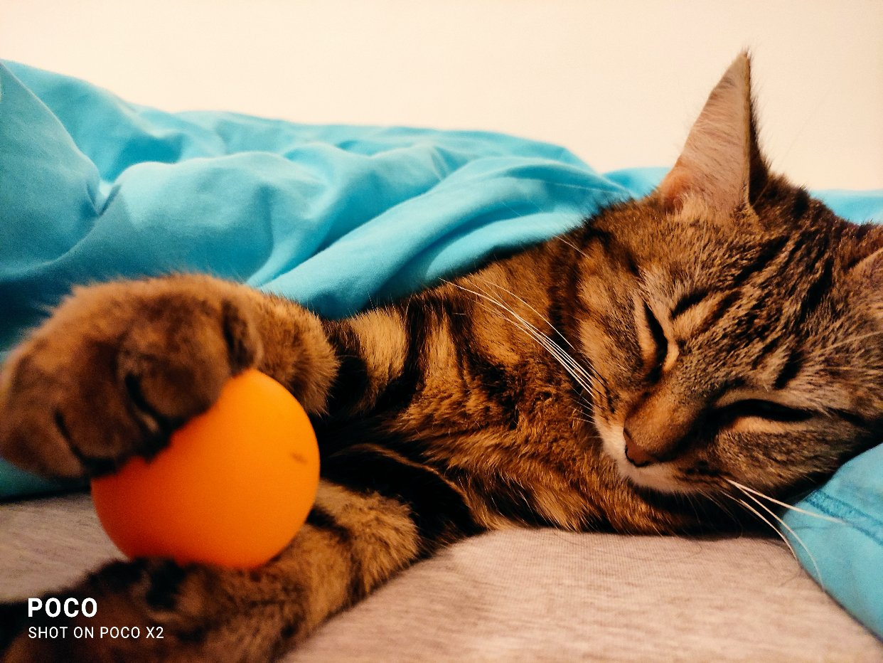 一只喜欢旅行的小猫咪