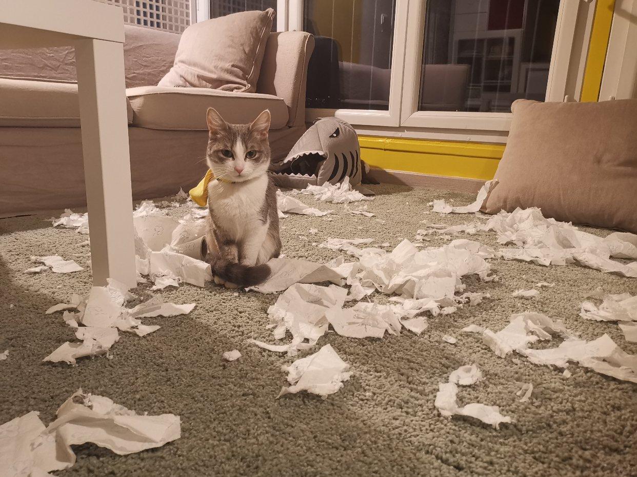 羡慕我家喵不咬纸巾的盆友来看一下