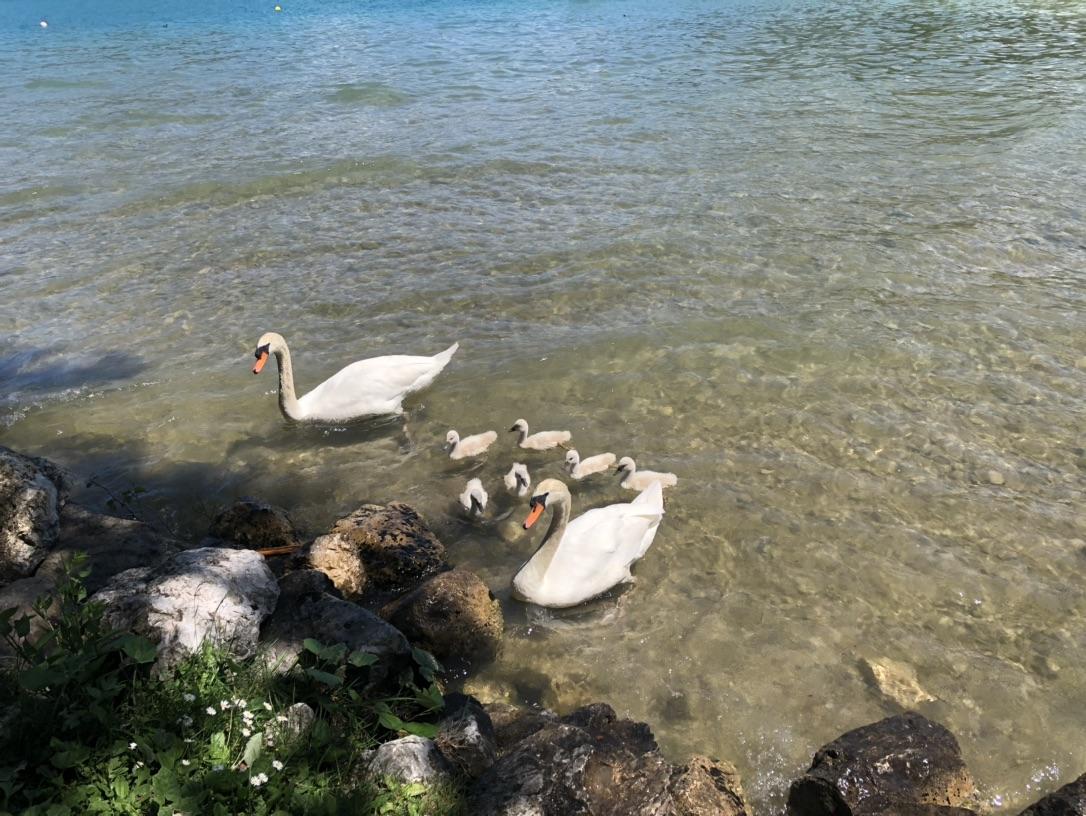 湖边晒太阳偶遇一家八口