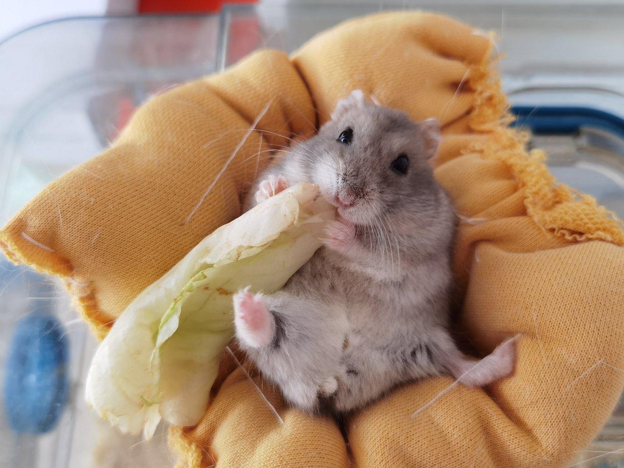 携俺家鼠子给大家wink一个!