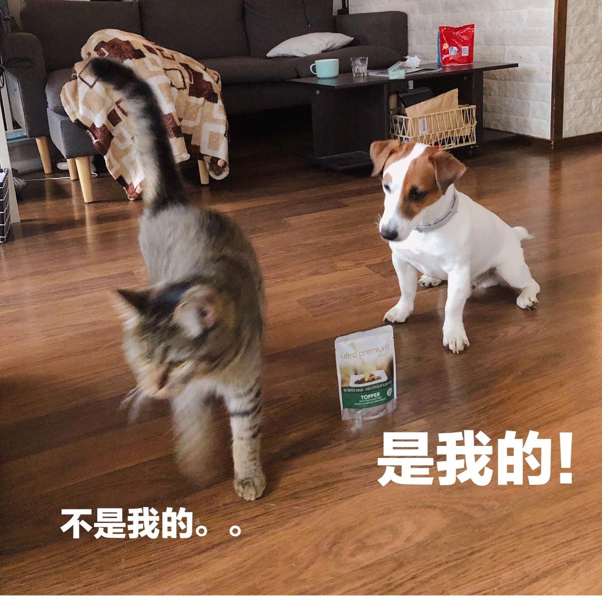 给两个毛毛虫更新猫粮狗粮品牌了!