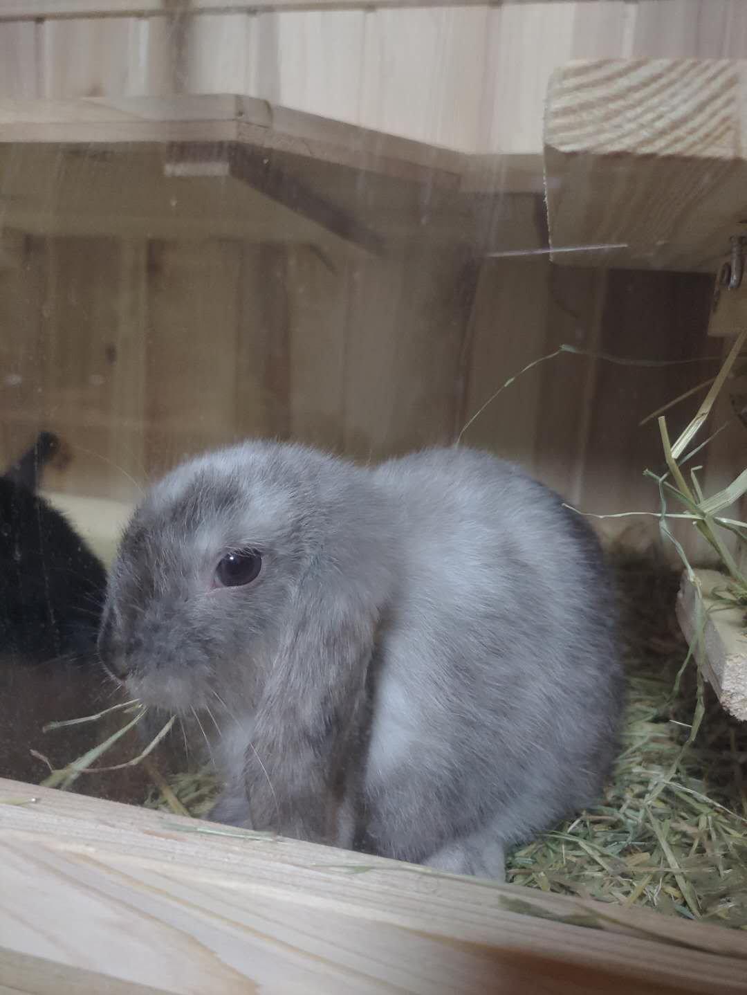 两只小🐰兔子