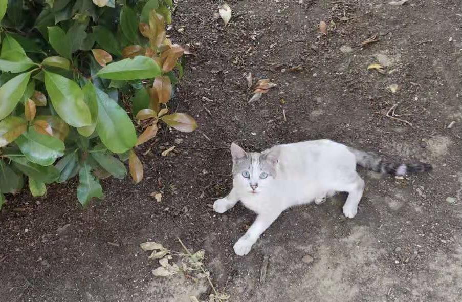 一只需要被领养的小猫咪