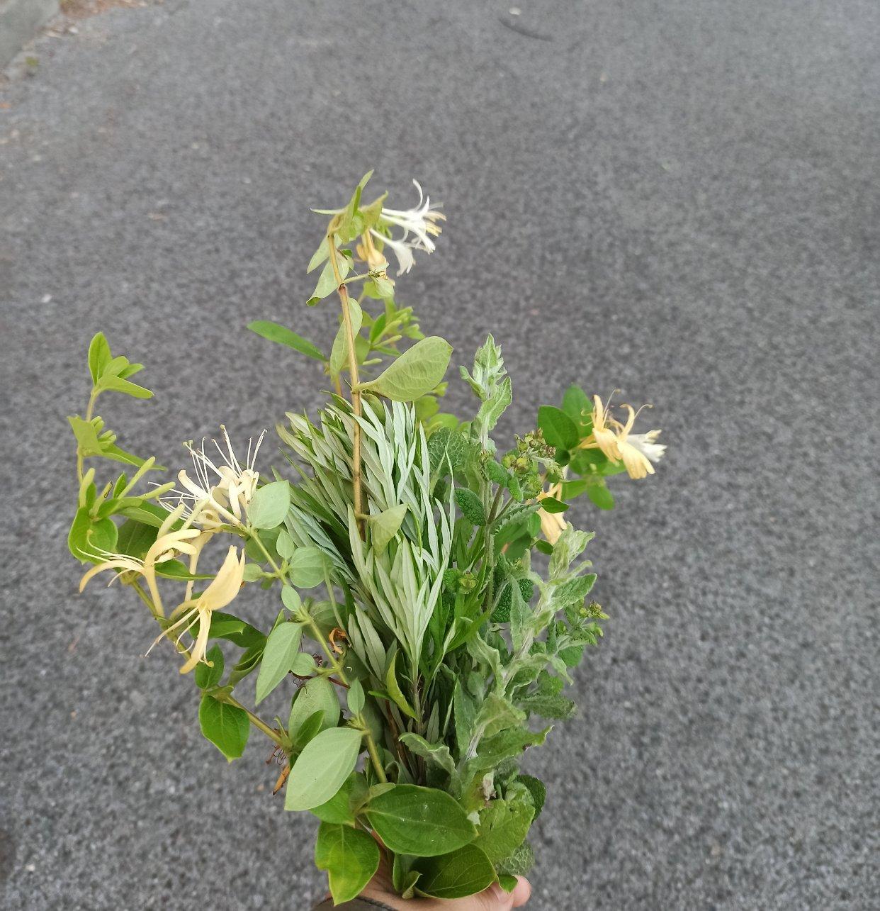 做一把美美的艾草薄荷金银花吧