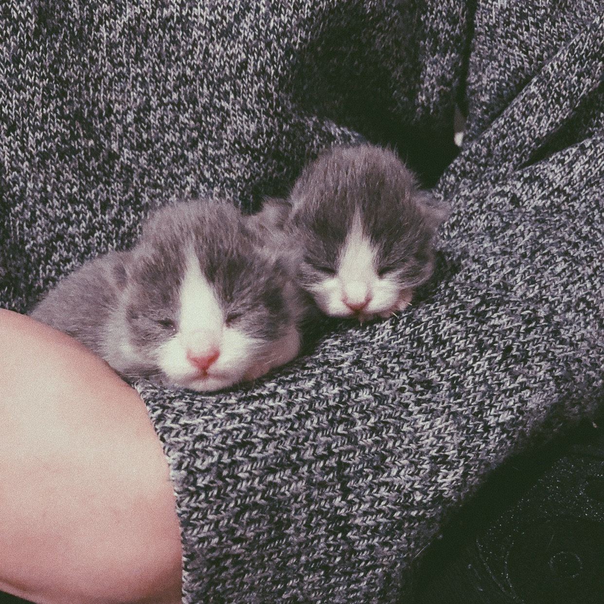 是刚生下来一周的小奶猫呀🐱