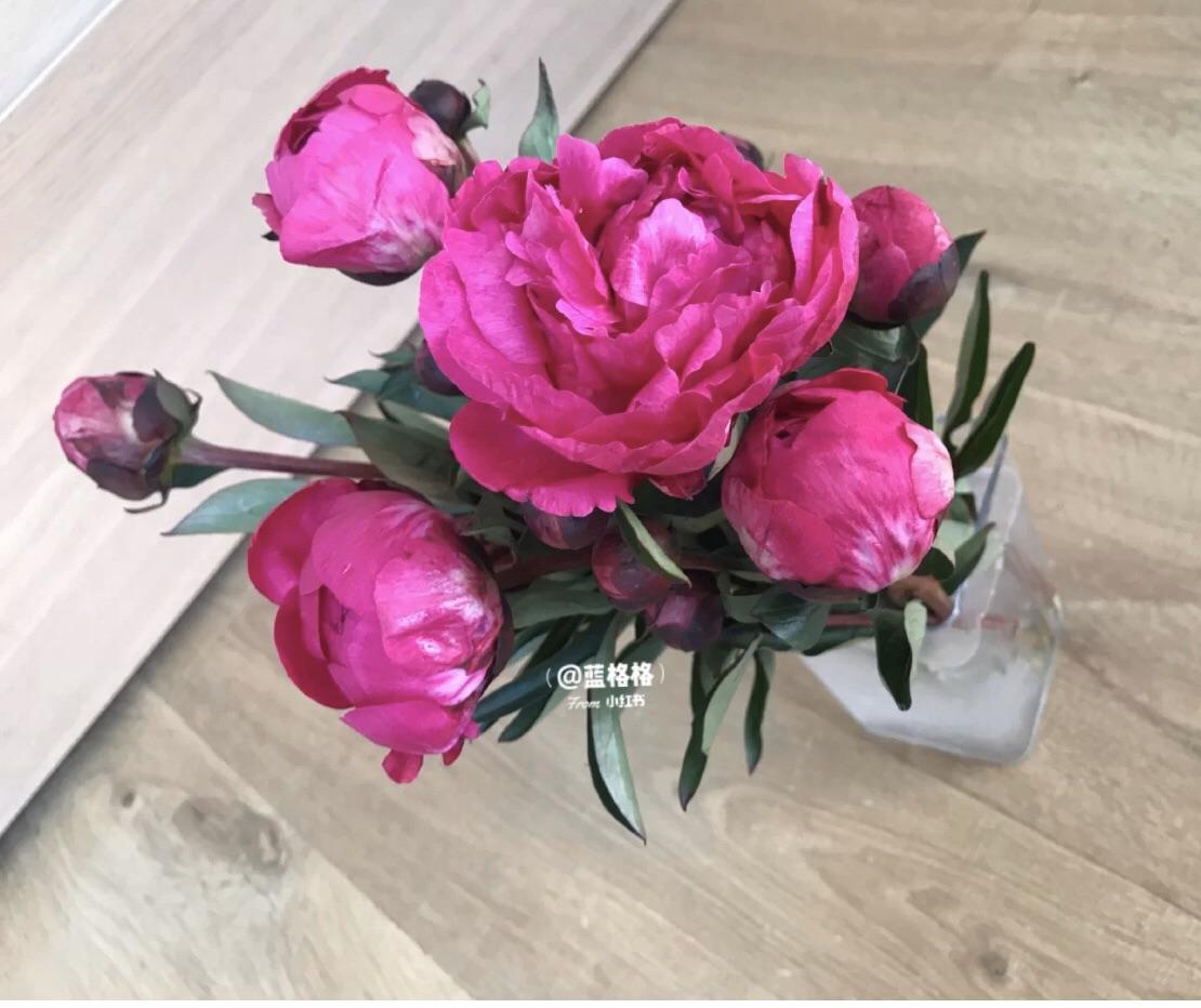【好物分享】Blooms每月送花,快速提升居家满足感