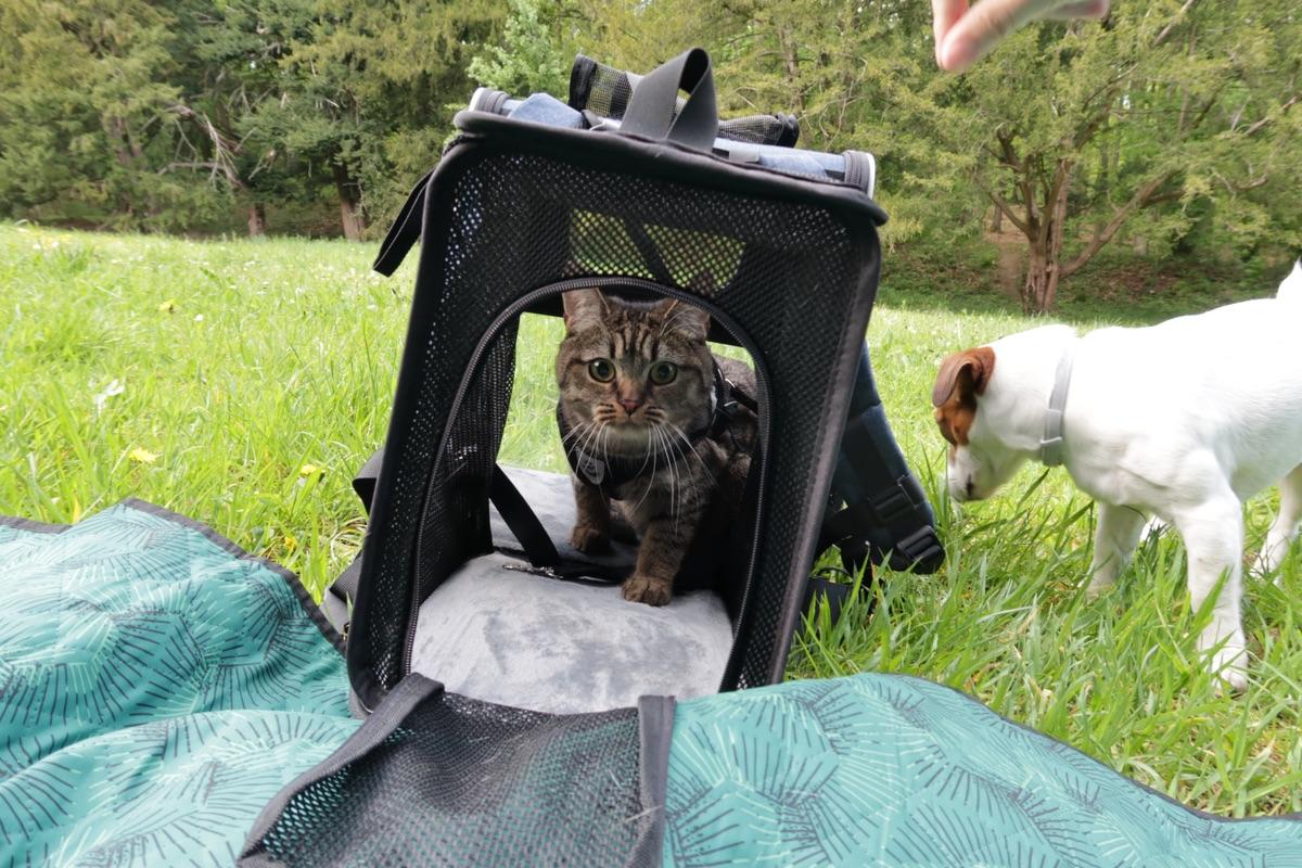 猫包推荐!巨好用!!