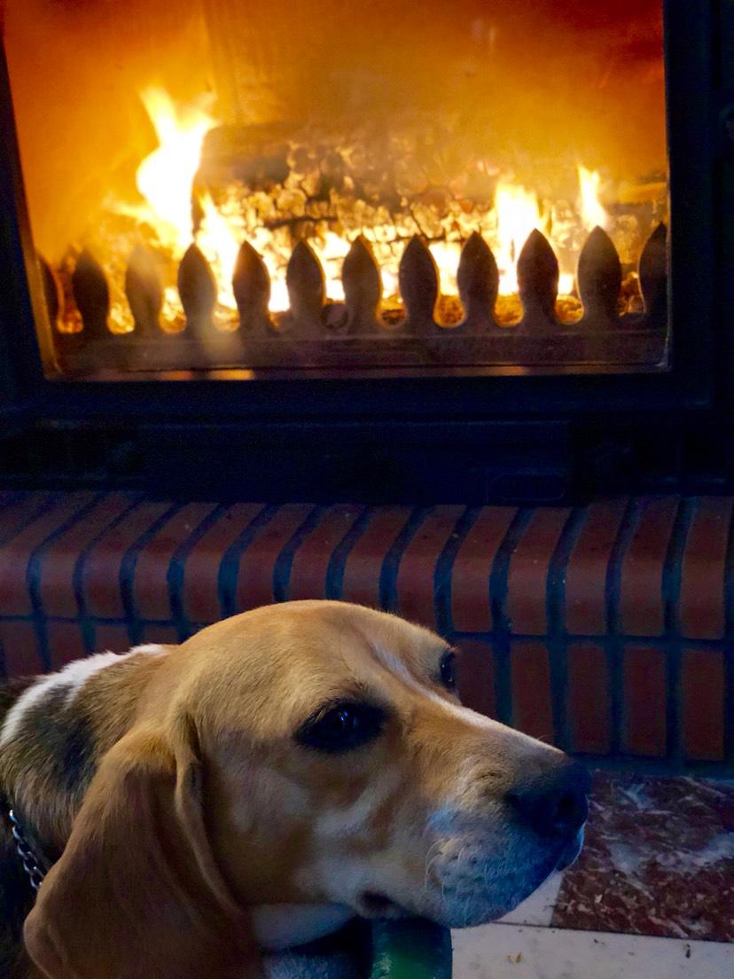 阴雨天在家烤着火撸蠢狗