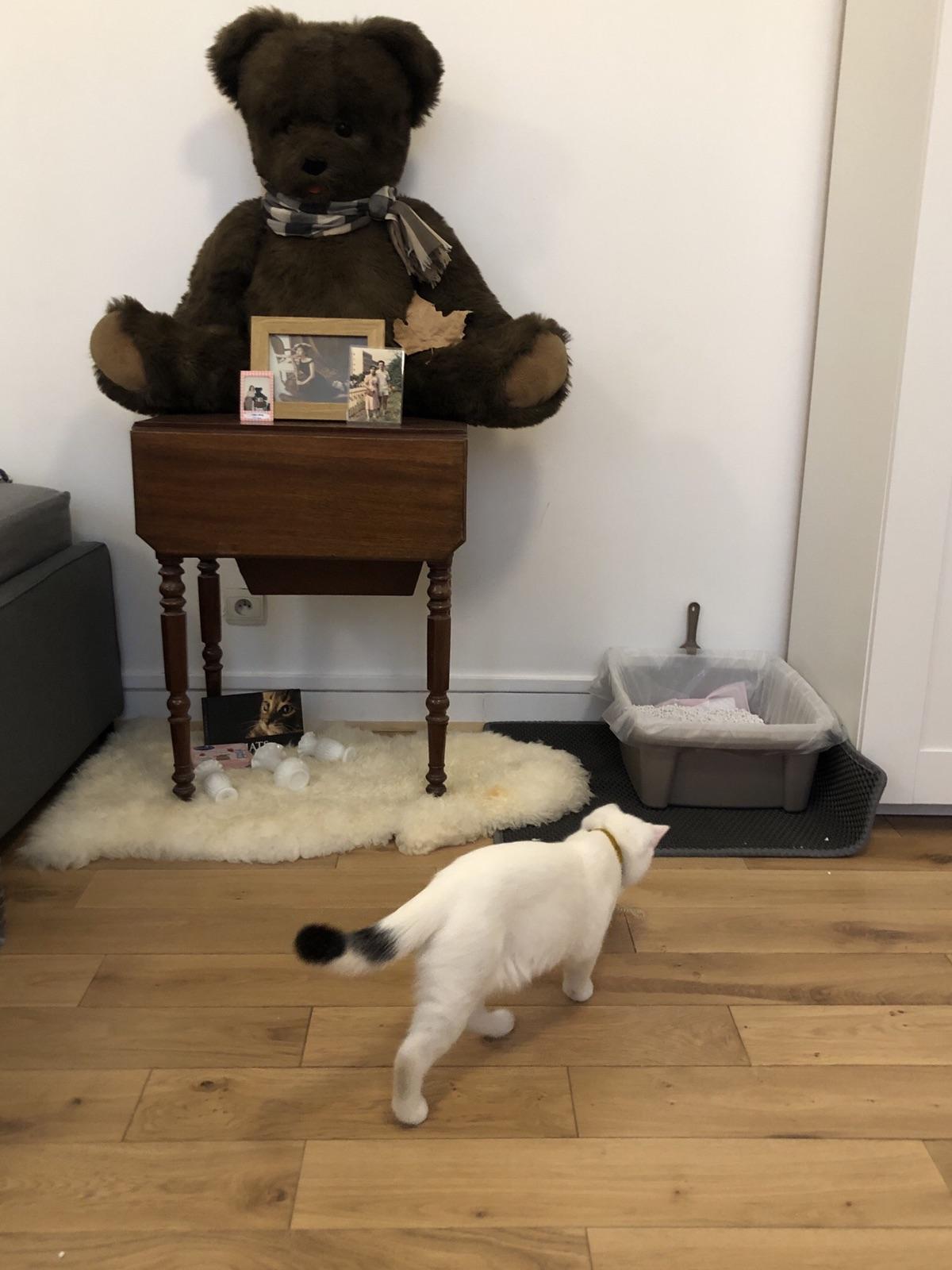 【猫奴日记】小天使变小恶魔?