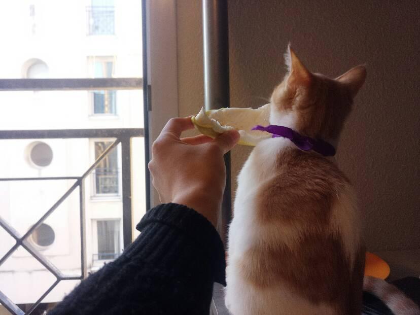 我家猫为何惧怕柚子皮