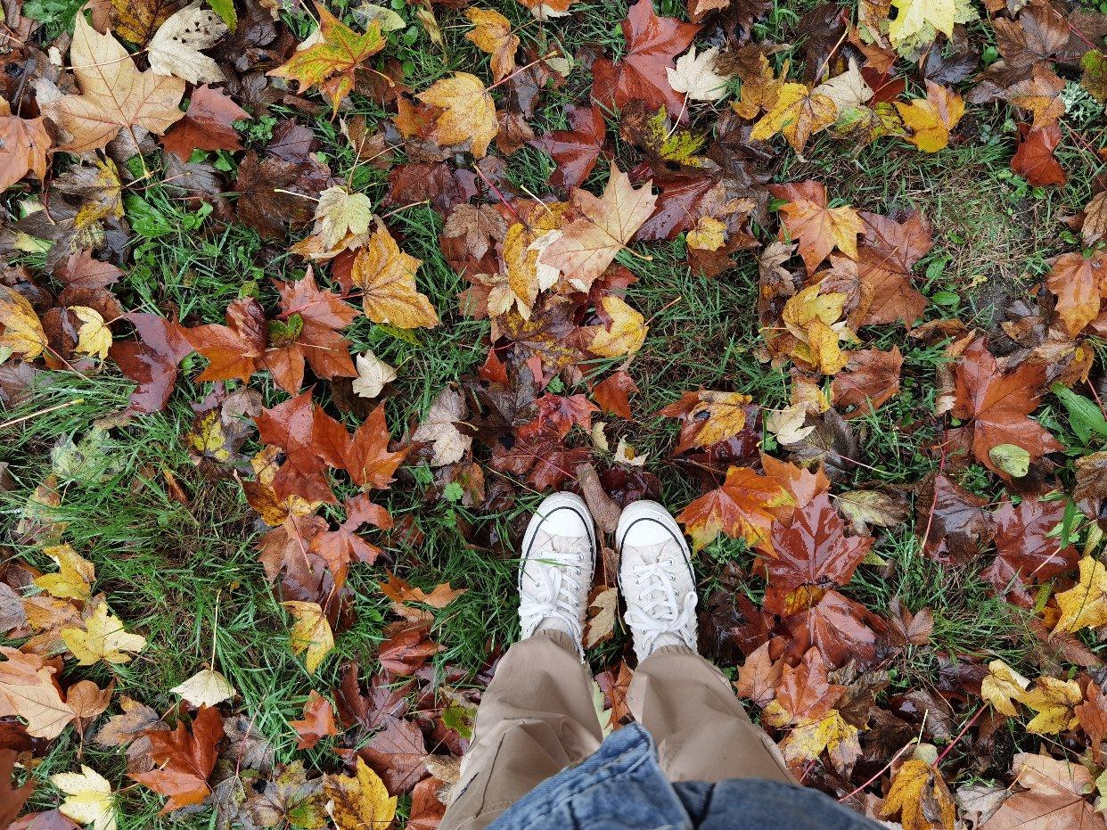 秋日的精髓!黄色红色枫叶🍁!