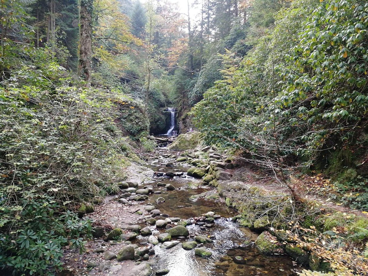 十月份的黑森林,还是那么美!
