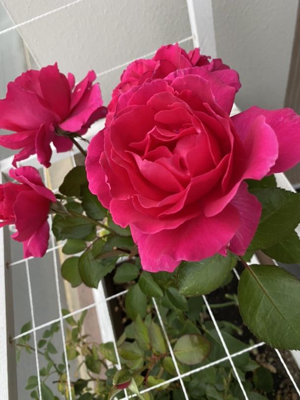 给大家来幅赏心悦目的花