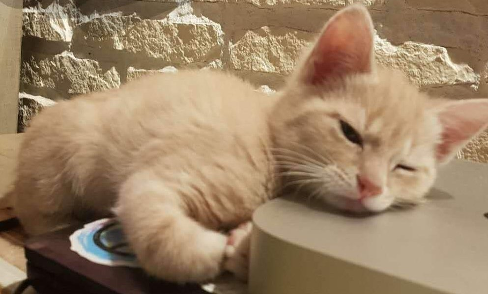 从天而降的小精灵,我的天使猫 sésame