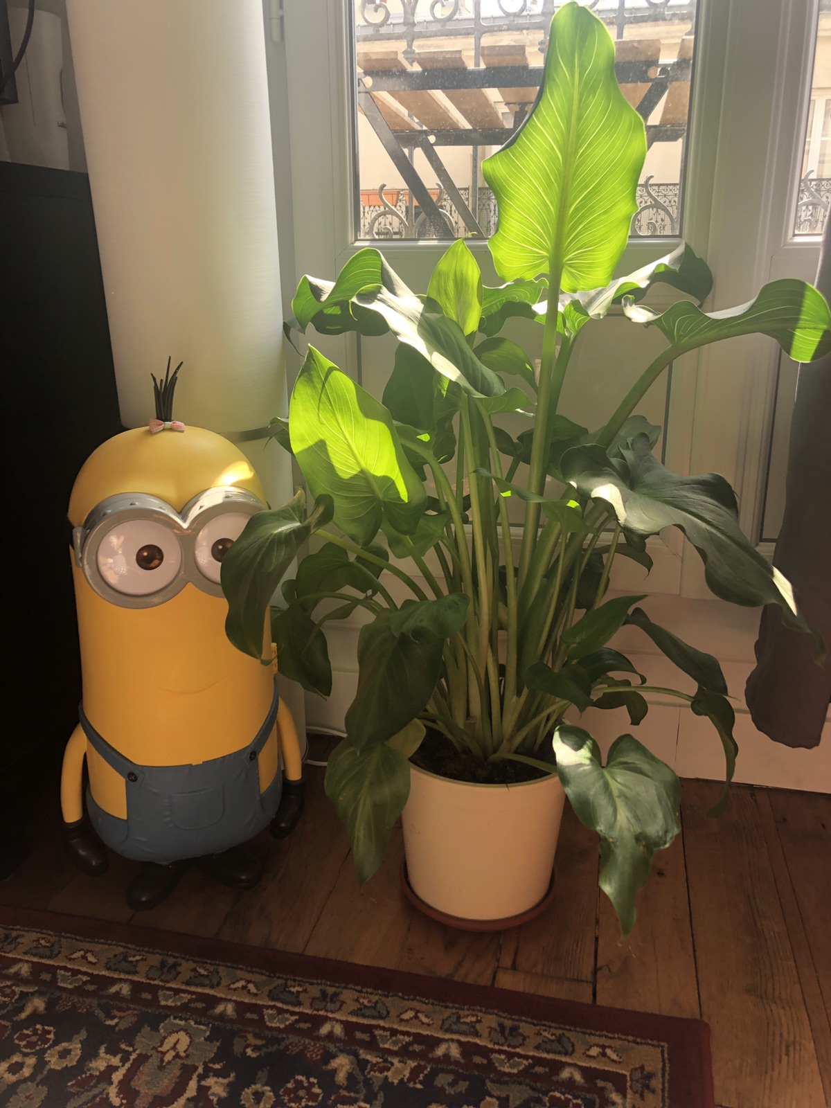 TGTG植物到我家10天以后都怎么样了……