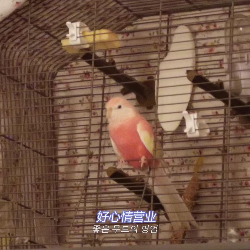 我带着我的鸟子来参赛啦!