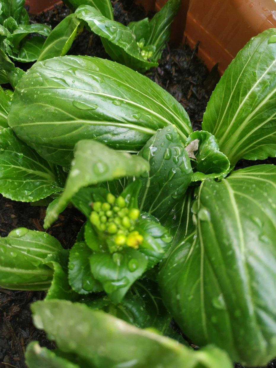 成功堆肥两次,一点点经验给绿植新手们