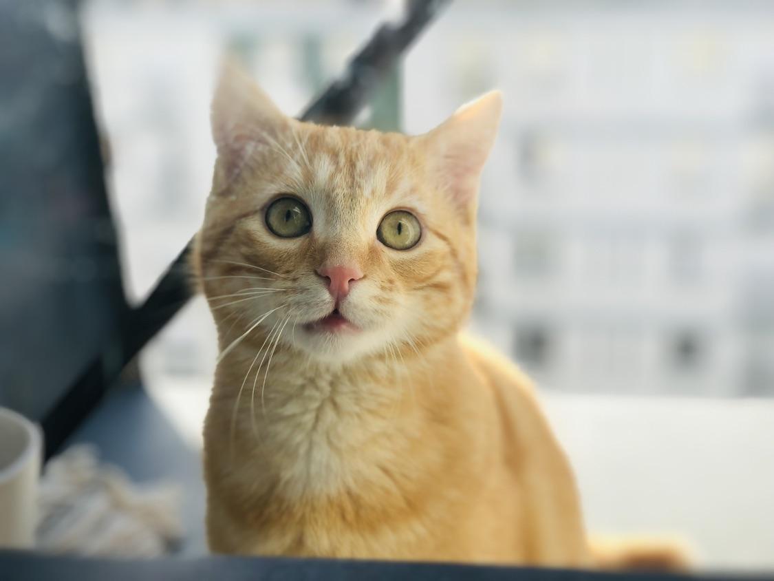 见证了橘猫到橘猪的成长历程