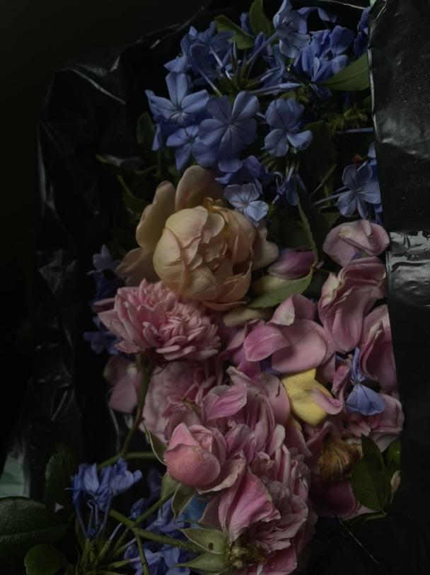 切花自由,自己种花