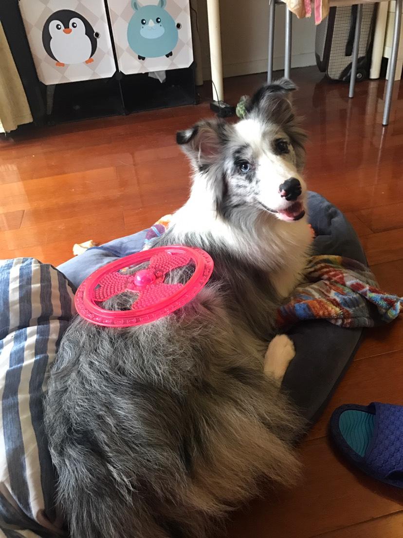 我家狗子小时候可以说是盛世美颜了