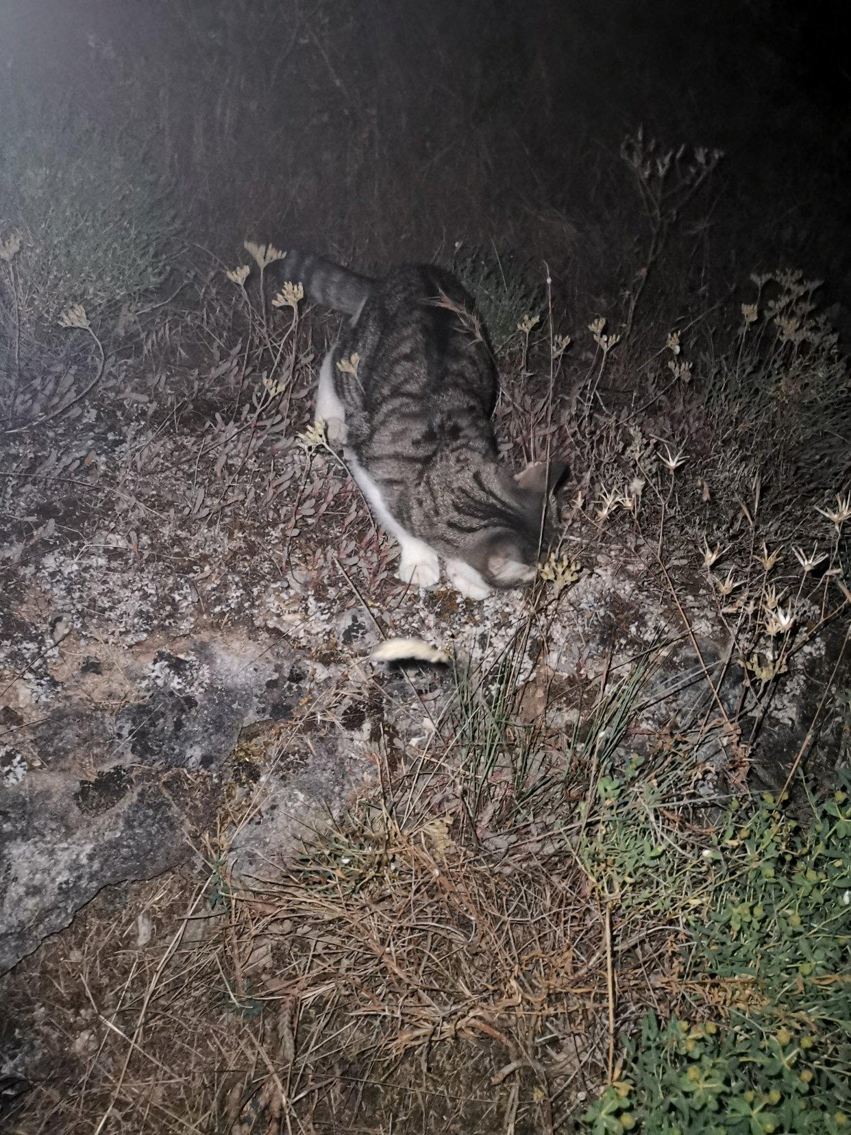 昨晚遇到的走山猫,今天又来打招呼了