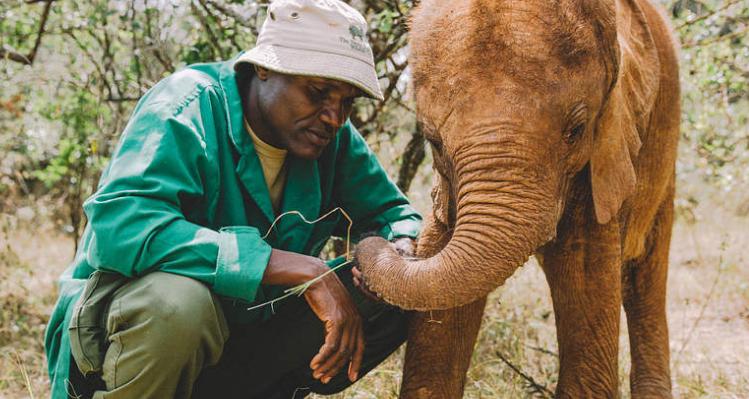 有意义的礼物   在肯尼亚领养一只小象吧